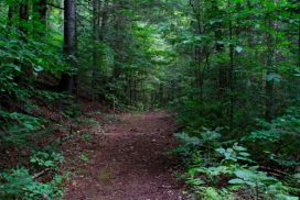 Gale River Hiking Trail