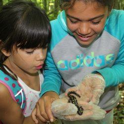 Copper Cannon Camp Outdoor Education - Salamandar Hunt